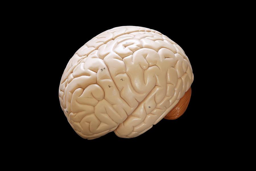 Horizontal Photograph - Human Brain by Richard Newstead