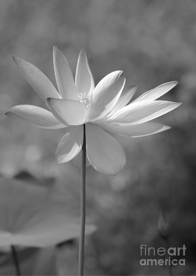 Lotus Photograph - I Love Lotus by Sabrina L Ryan