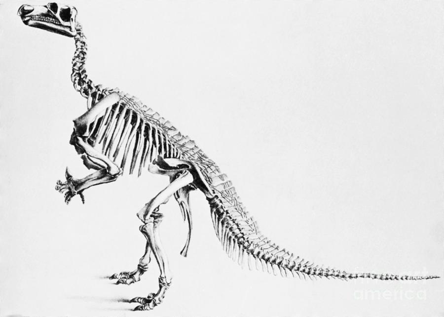 Dinosaur Photograph - Iguanodon, Mesozoic Dinosaur by Science Source