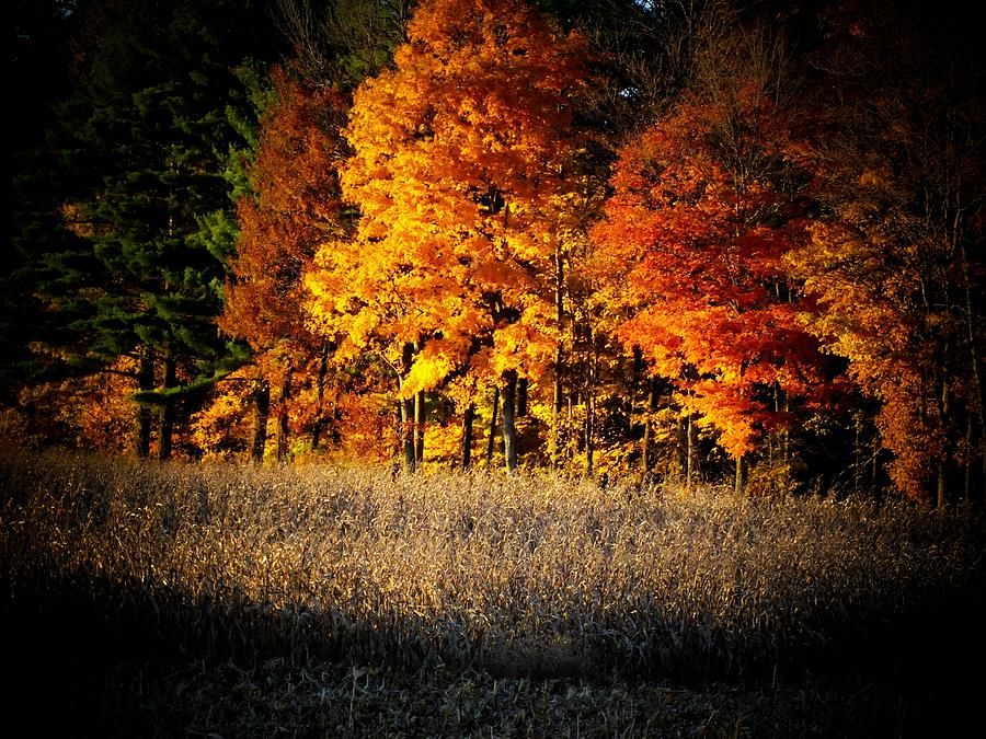 Trees Photograph - Indiana Autumn by Michael L Kimble