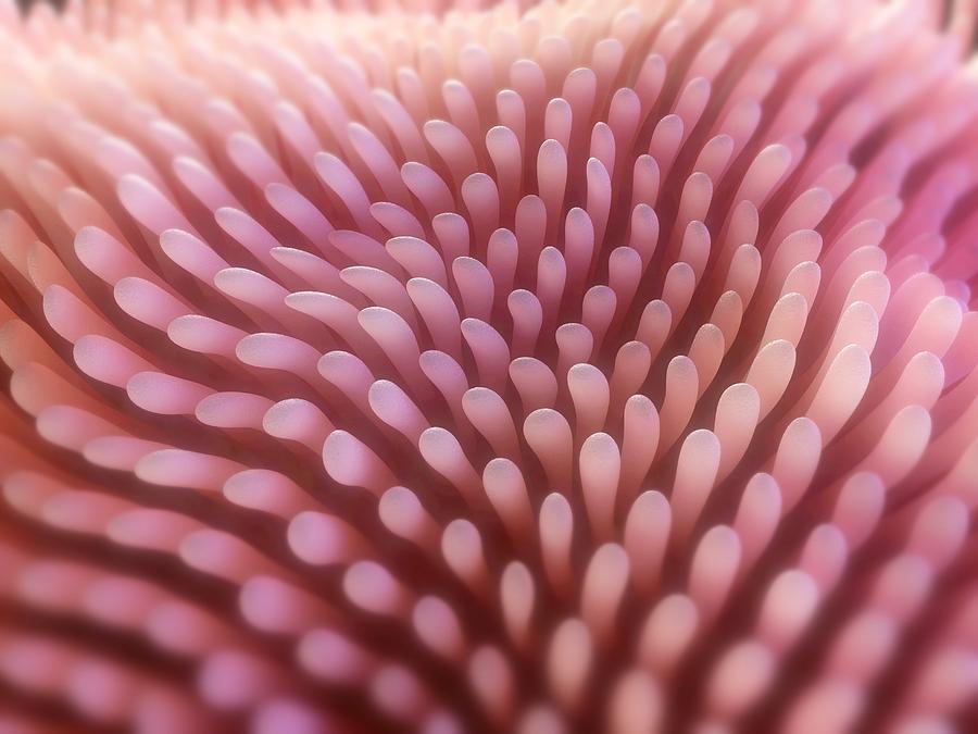Artwork Photograph - Intestinal Villi, Artwork by Sciepro