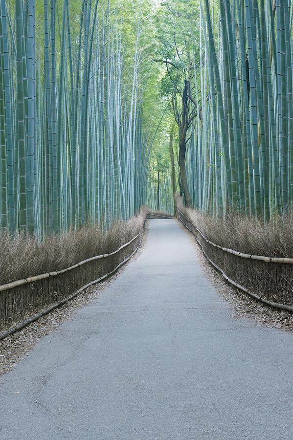 Boundary Photograph - Japan Kyoto Arashiyama Sagano Bamboo by Rob Tilley