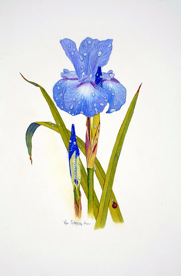 Flowers Painting - Japanese Iris by Bill Gehring