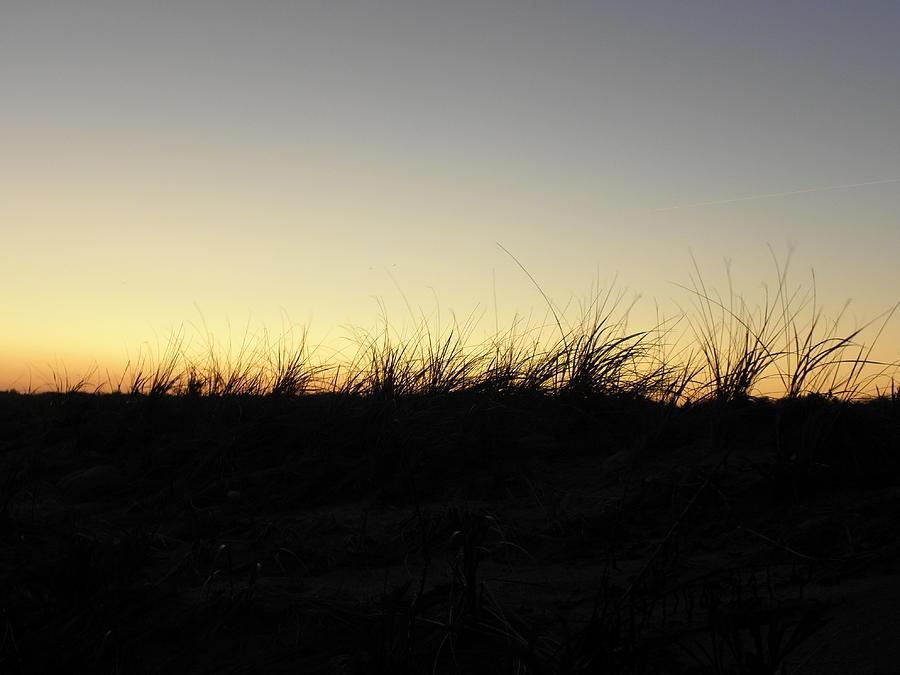 Seagrass Photograph - Just A Touch by Kim Galluzzo Wozniak