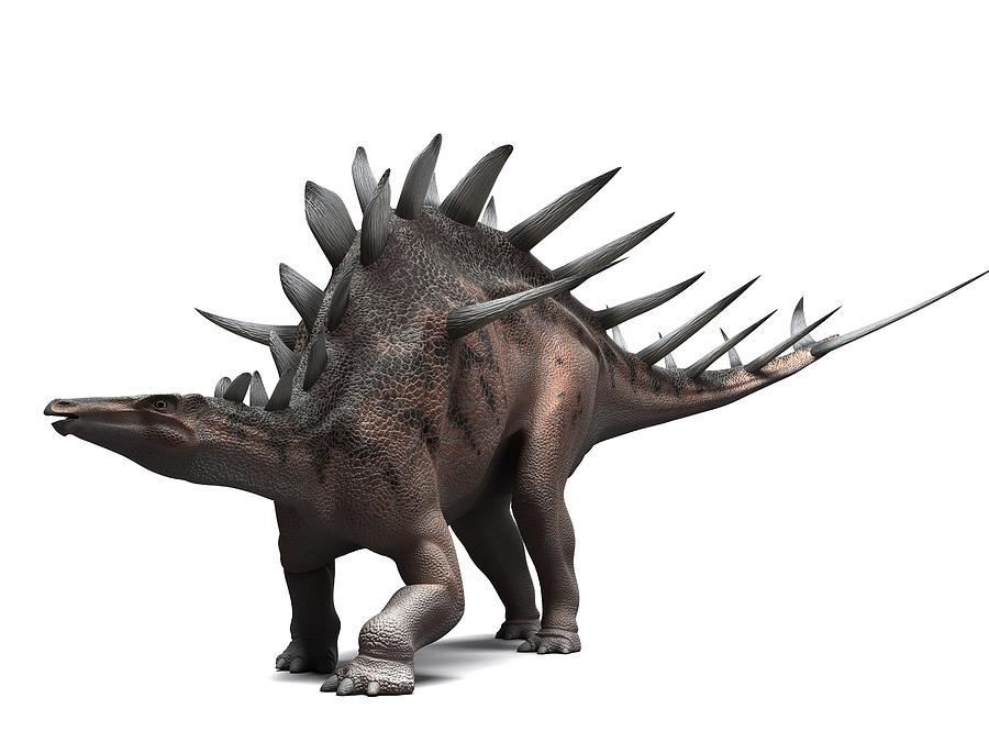 Artwork Photograph - Kentrosaurus Dinosaur, Artwork by Sciepro