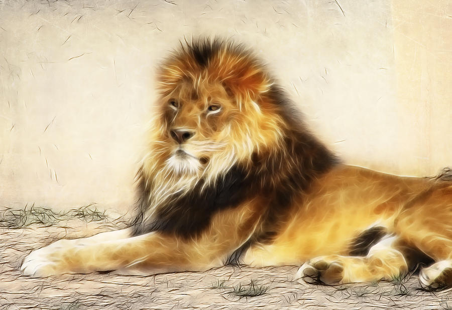 Lion Photograph - King by Tilly Williams