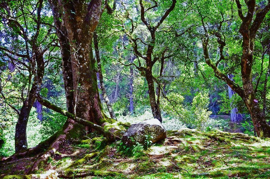 Nature Photograph - Kingdom Of The Trees. Peradeniya Botanical Garden. Sri Lanka by Jenny Rainbow