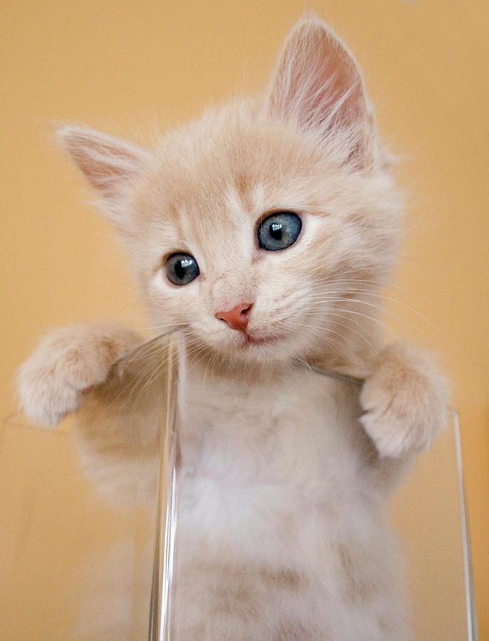 Vertical Photograph - Kitten In Glass Vase by Sanna Pudas