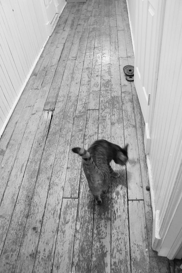Cat Photograph - Kitty by Nina Mirhabibi