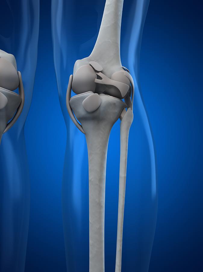Vertical Digital Art - Knee Anatomy, Artwork by Sciepro