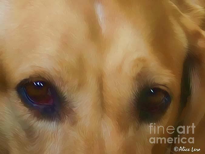 Dogs Photograph - Kyla by Alice Lero