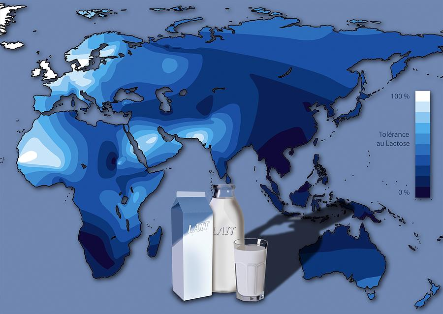 Lactose Intolerance Photograph - Lactose Tolerance, Eurasia And Africa by Art For Science