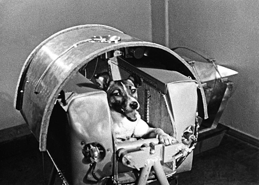 first animal in space laika - photo #14