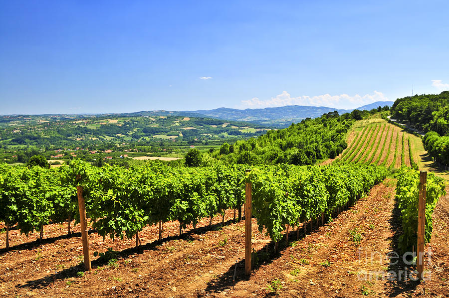Vineyard Photograph - Landscape with vineyard by Elena Elisseeva
