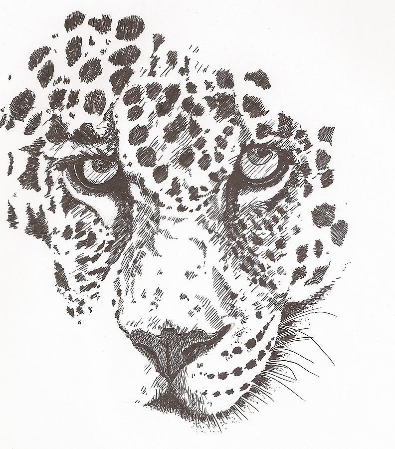 Leopard Drawing By Pat Barker