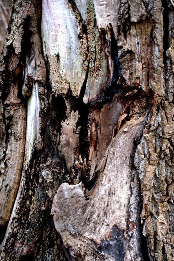 Nature Photograph - Life Patterns by Valia Bradshaw