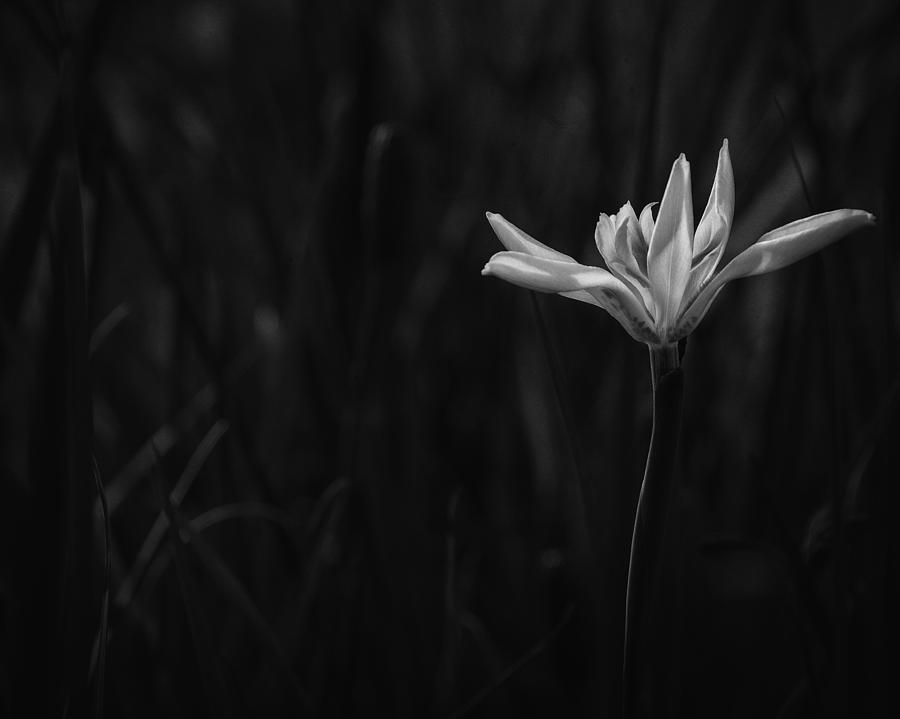 Black And White  Photograph - Lily by Mario Celzner