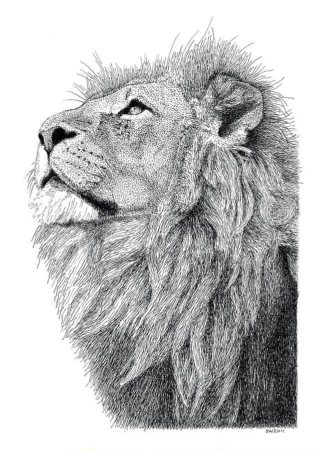Lion Drawing - Lion by Scott Woyak