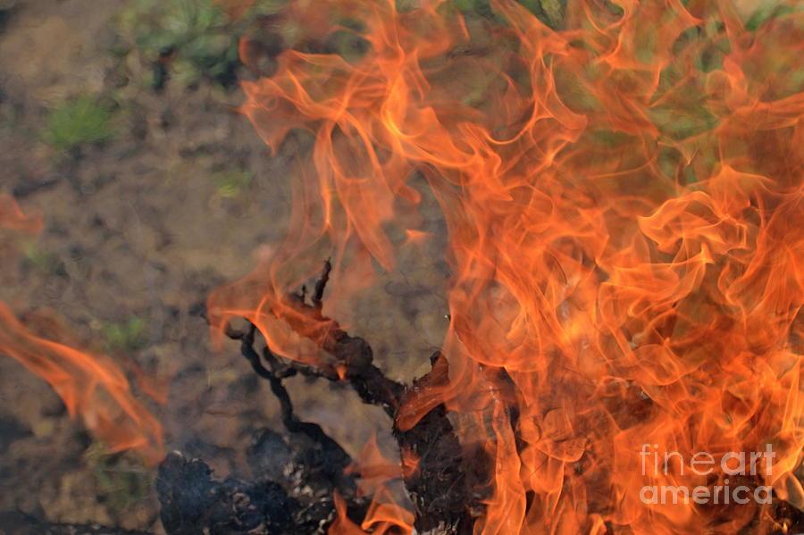 Vitality Photograph - Log Fire And Flames by Sami Sarkis