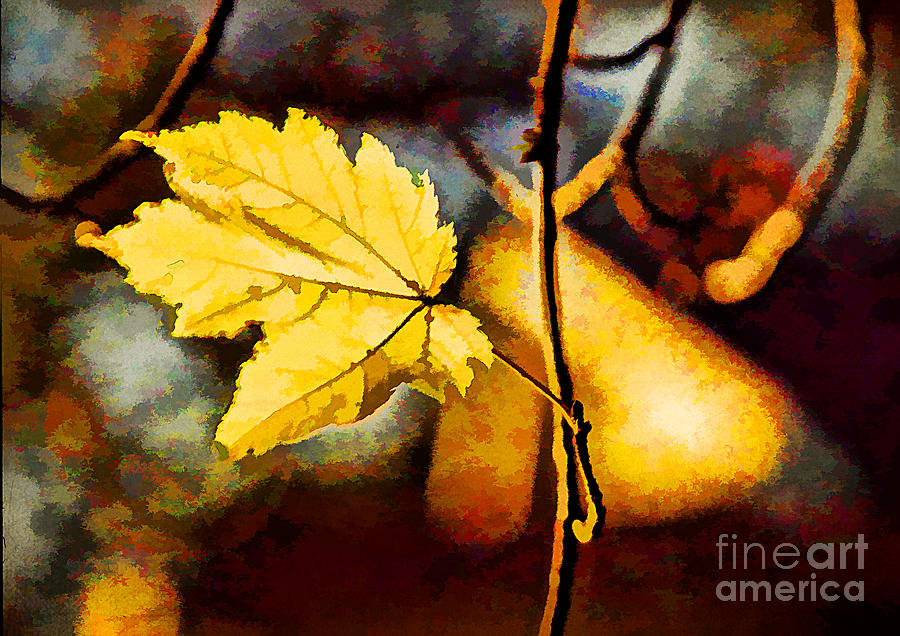 Photo Photograph - Lone Leaf by Darren Fisher
