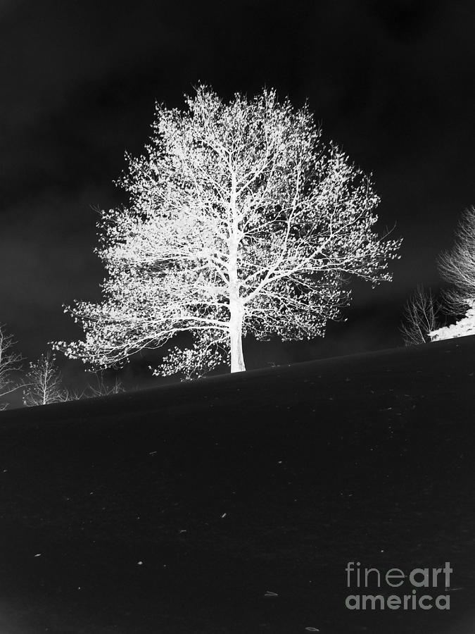 Winter Photograph - Lone Tree by David Bearden