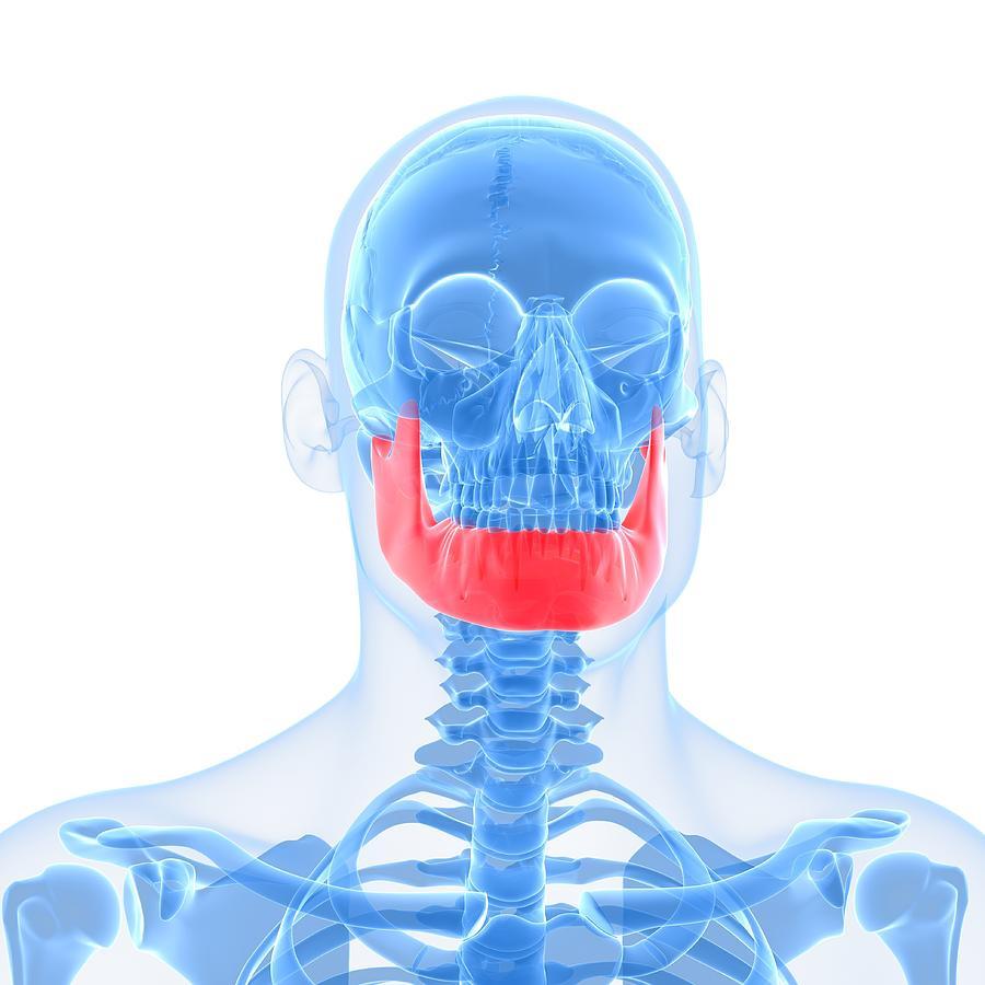 Lower Jaw Bone Artwork Digital Art By Sciepro