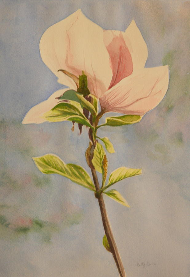 Magnolia Flower Painting - Magnolia Blossom by Betty-Anne McDonald