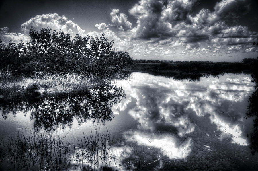 Big Cypress National Park Photograph - Mangroves In The Morning by Bob Hartmann