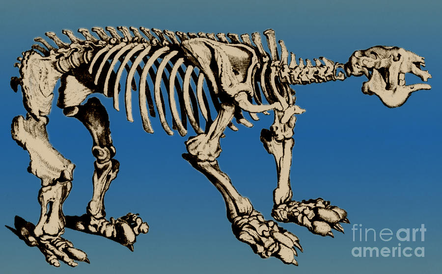 History Photograph - Megatherium Extinct Ground Sloth by Science Source