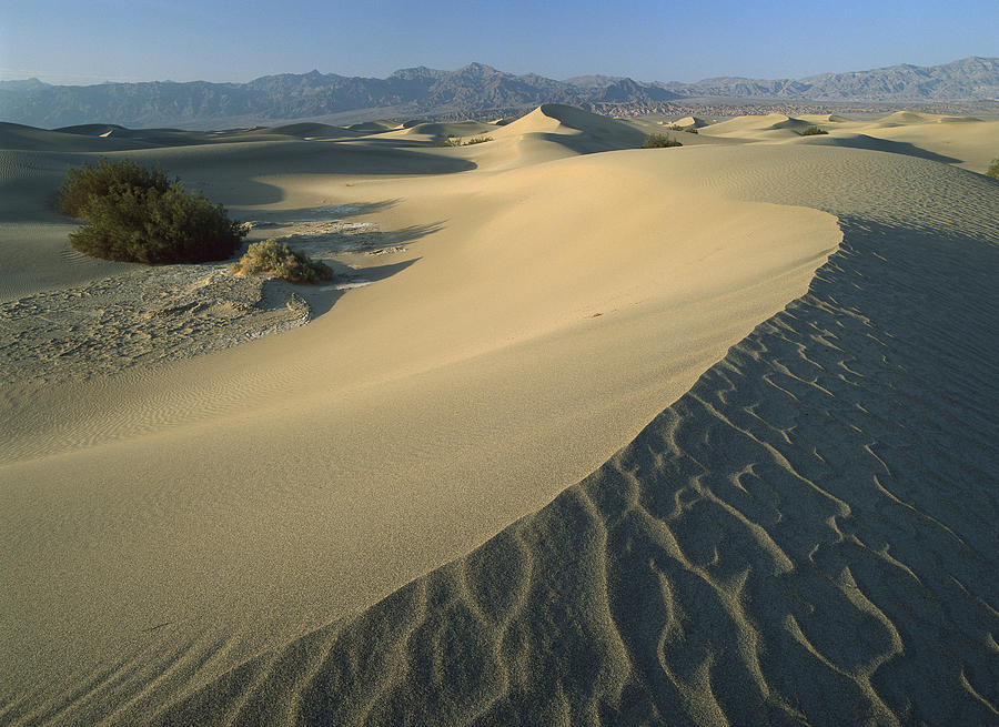 Mesquite Flat Sand Dunes Death Valley Photograph by Tim Fitzharris