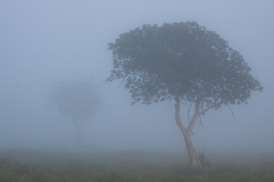 Africa Photograph - Misty Morning by Hein Welman