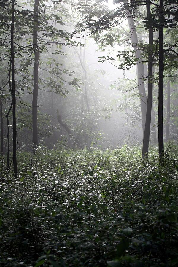 Morning Photograph - Misty Morning by Rick Rauzi