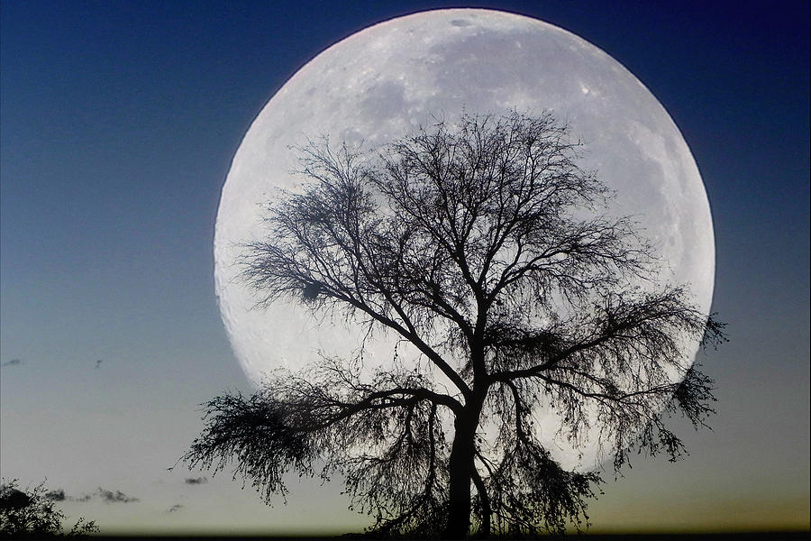Majestic Photograph - Moon And Tree by Jesus Nicolas Castanon