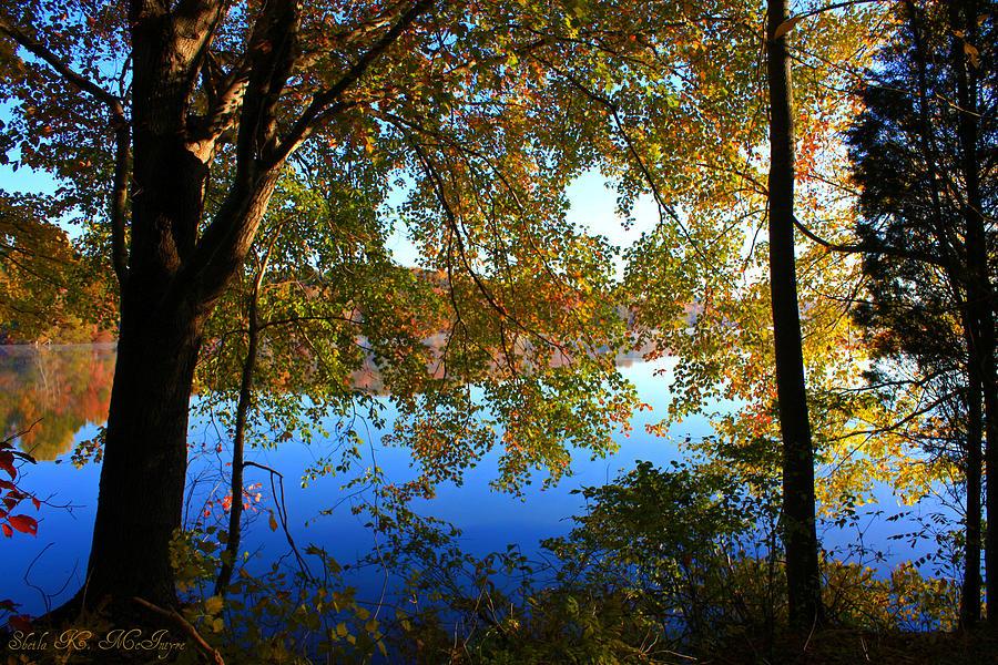 Mystical Fall Tree by Sheila Kay McIntyre