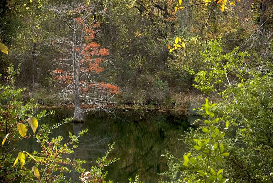 Natural Frame Photograph - Natures Frame by Cindy Rubin