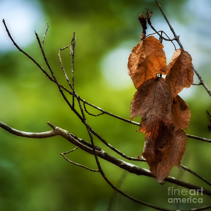 Summer Photograph - Never Let Go by Bill Stone