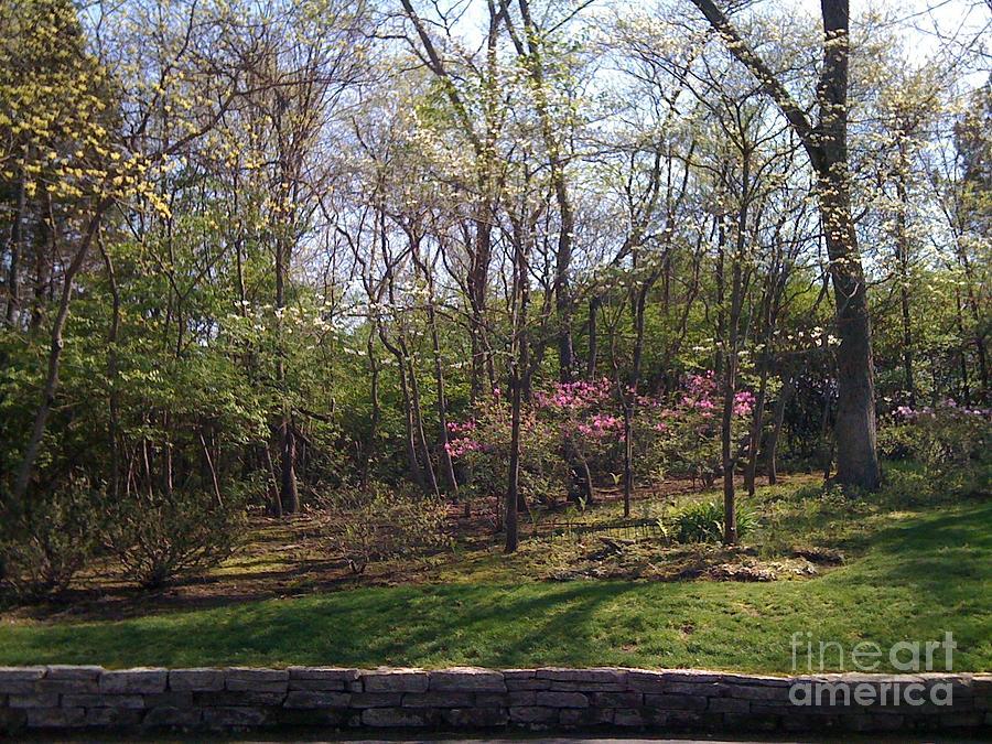 Springtime Photograph - New Beginnings by Barbara Plattenburg