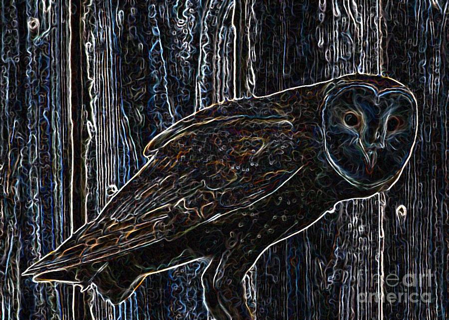 Barn Owl Photograph - Night Owl - Digital Art by Carol Groenen
