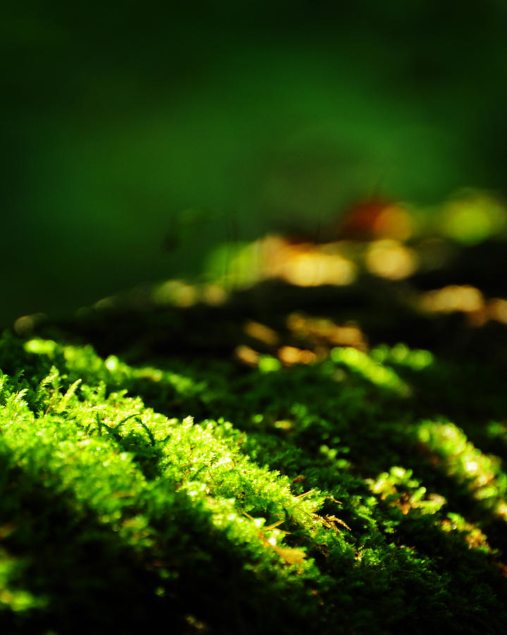 Moss Photograph - One Hundred Ways by Rebecca Sherman