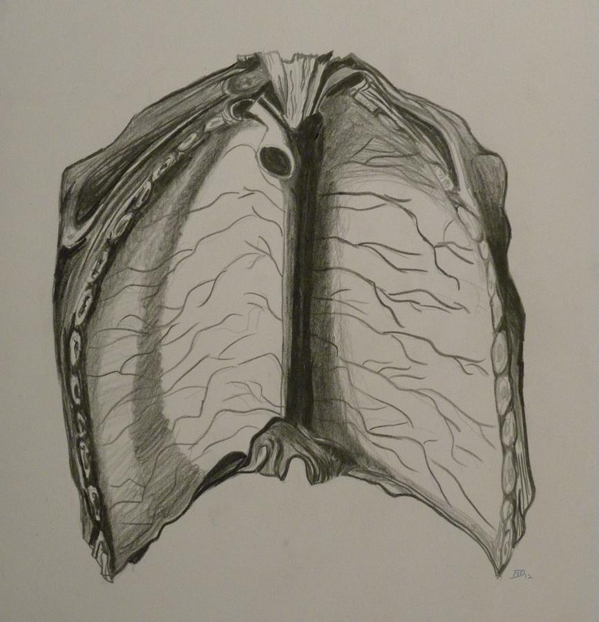 Anatomy Drawing - Open Up by Beula Daisle