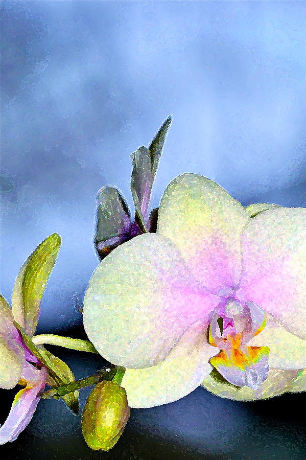 Floral Photograph - Orchid 1 by Pamela Cooper