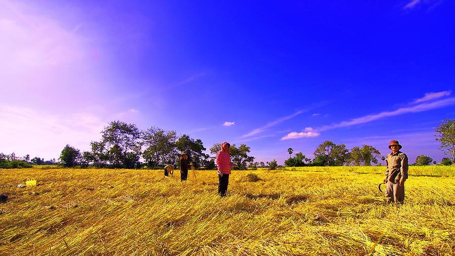 Paddy Field Photograph by Arik S Mintorogo