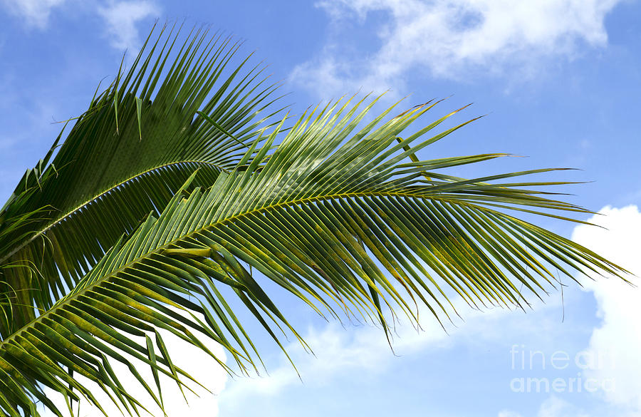 Palm Photograph - Palm  by Blink Images