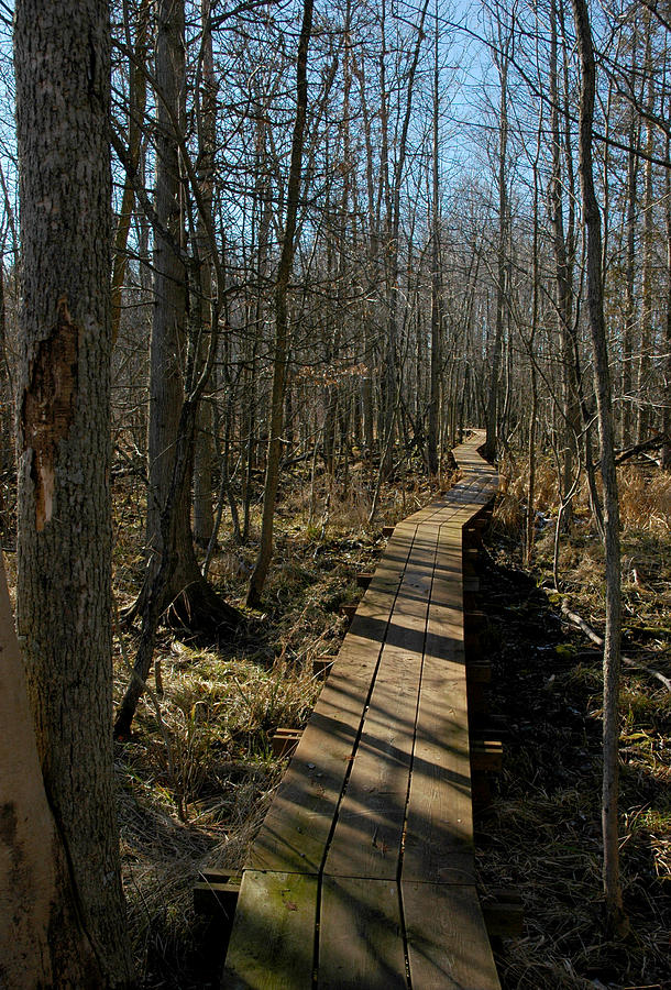 Usa Photograph - Path Into The Woods by LeeAnn McLaneGoetz McLaneGoetzStudioLLCcom