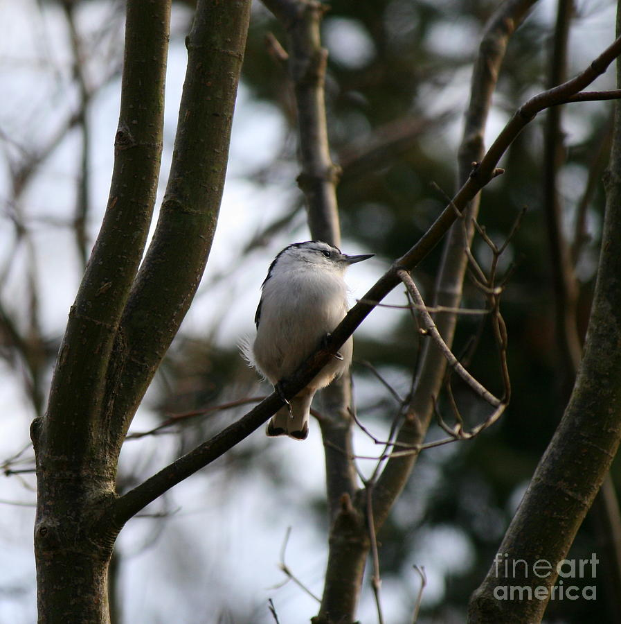 Bird Photograph - Perched And Content  by Neal Eslinger