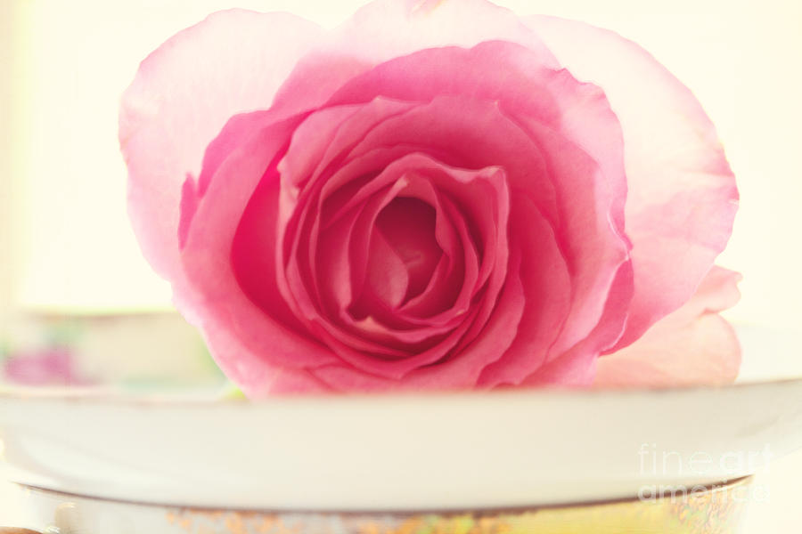 Rose Photograph - Pink Rose and Teacup by Kim Fearheiley