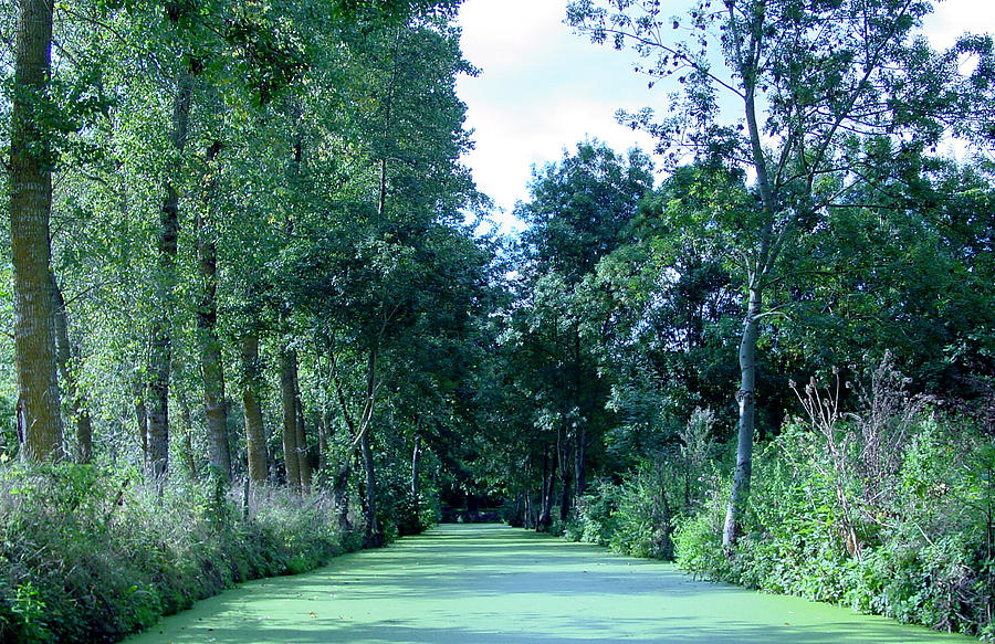 River Photograph - Poitevin Marsh by Poitevin Marsh