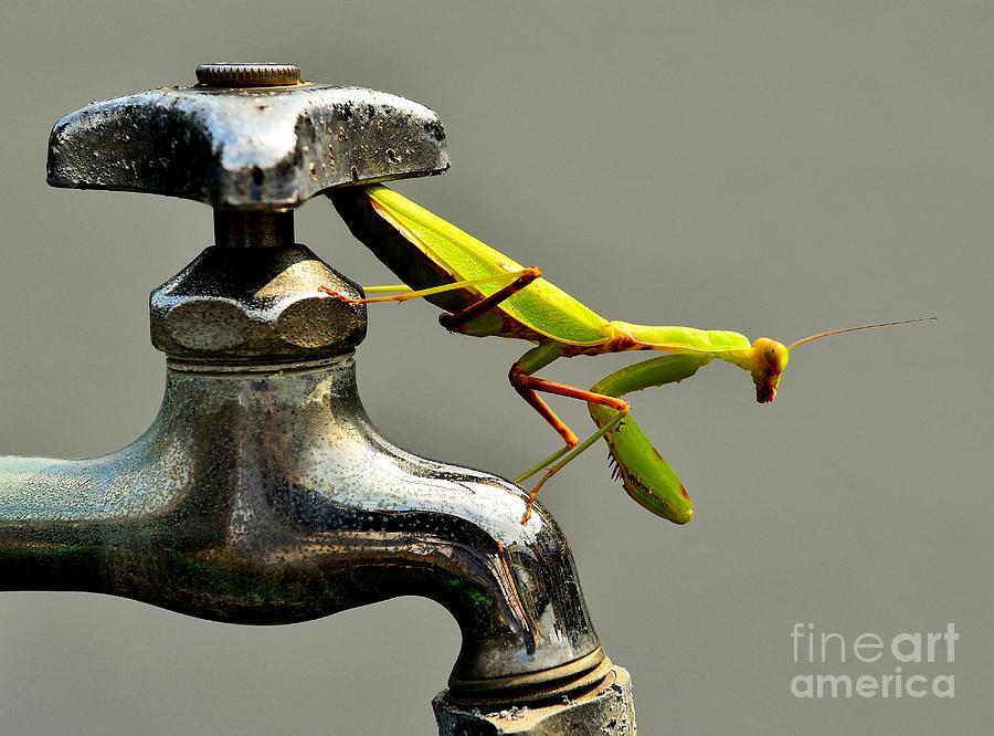 Praying Mantis Photograph - Praying Mantis by Dean Harte