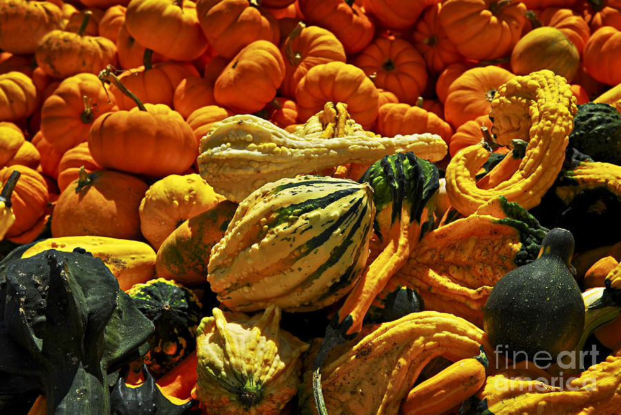 Pumpkin Photograph - Pumpkins And Gourds by Elena Elisseeva