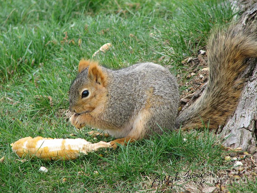 Squirrel Photograph - r by Bobbylee Farrier